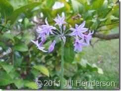 Herb Garden (2)
