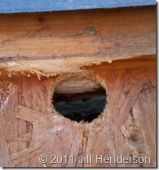 Woodpecker Hole © 2011 Jill Henderson