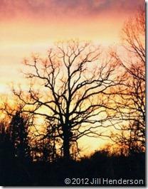 Sunrise copyright Jill Henderson - Show Me Oz