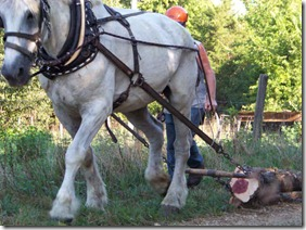 Horse Logging Demonstration