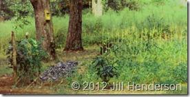 2001 Garden on the edge of wilderness.  © 2012 Jill Henderson