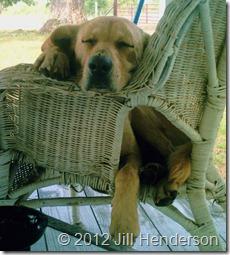 Watchdog © 2012 Jill Henderson