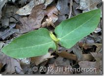 Seedling © 2012 Jill Henderson