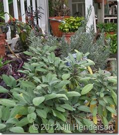 Herb Garden © 2012 Jill Henderson