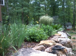 The Herb Garden copyright Jill Henderson