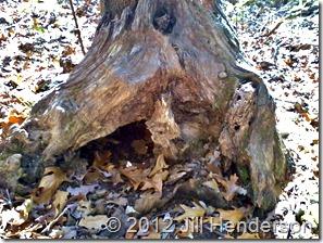 Den Tree - Copyright Jill Henderson