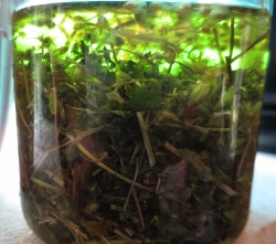 herb-comfrey-chickweed-oil-infusion-2.jpg