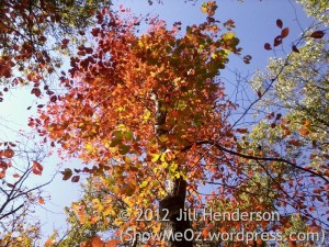 Fiery Fall Leaves © 2012 Jill Henderson