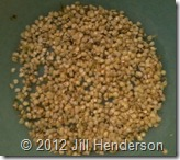 Seed Saving - Copyright Jill Henderson