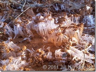 Ice Needles form in water-logged clay during a cold spell.