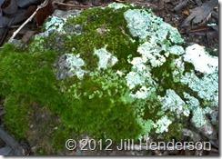 Moss, Lichen & Limestone