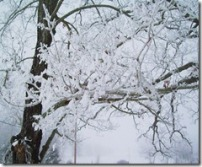 Winter Ice Storm - copyright Jill Henderson