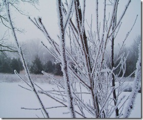 Winter Ice Storm 2 - copyright Jill Henderson