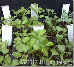 2012 8-29 Seedlings (4)_thumb[7]