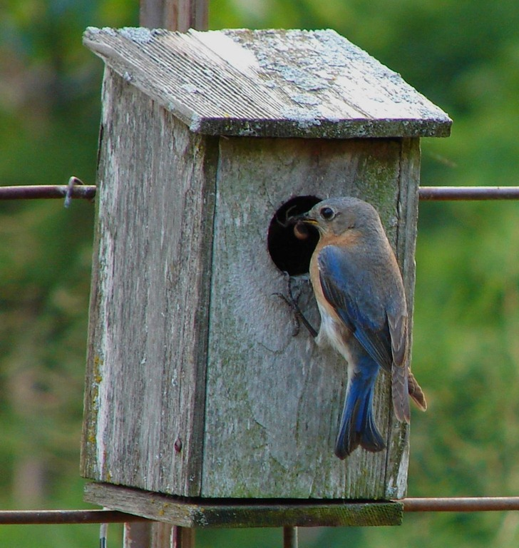 How to keep cats away from bird houses