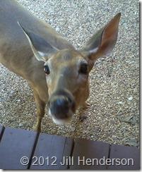 Daisy says hello.   Image by Jill Henderson