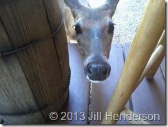 Daisy sometimes still stops by.  Image by Jill Henderson