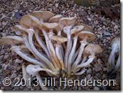 2012 10-23 Ringed Honeys (4)