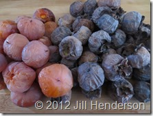 Two natural varietals of wild persimmon. Copyright Jill Henderson https://showmeoz.wordpress.com