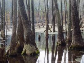 Tupelo Gum Pond copyright Jill Henderson