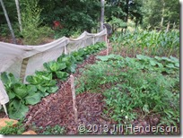 2013 6-16 Early Summer Garden (6)