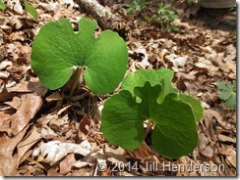 2013 4-21 Bloodroot - Blue Hole