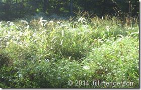 2013 9-21 Sunlit Meadow