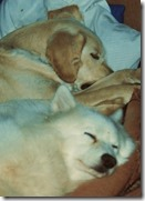 1993-1 - Gafield, AR - Buck and Milo snuggle up cropped