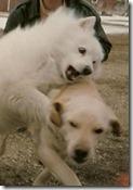 1995-11 Faulkton, SD - Jill, Buck and Milo at Grandma Henderson's