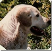 1995-5 - Swan Lake, MT - Buck