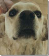 1999-12 - Bemidji, MN - Buck's big nose 'what ya got there'