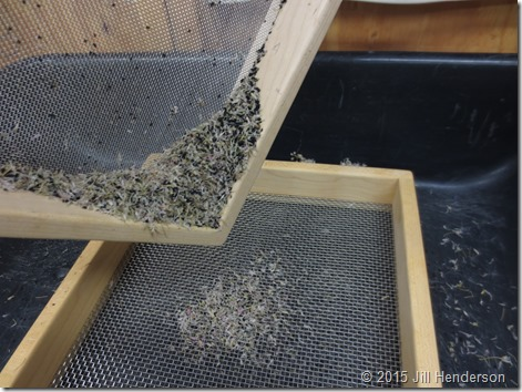 Seed screens are used to seperate seeds from chaff. Image copyright Jill Henderson