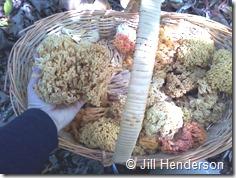 Mushroom - Coral 2012 10-7 (3)