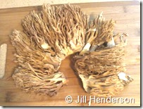 Large coral mushroom cleaned, dried and ready to eat!  Photo copyright Jill Henderson