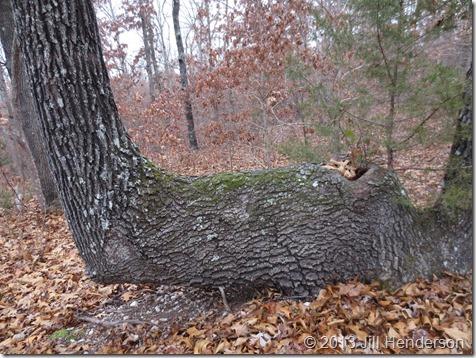 2014 12-1 Bent Trees (9)