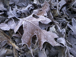 2011-12-24 Christmas Eve frost (1).jpg