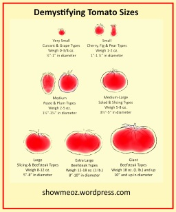 Demystifying Tomato Sizes Poster