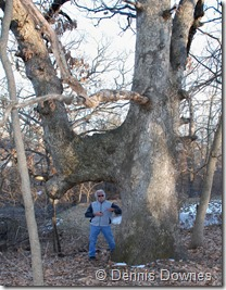 This double trunk Trail Marker Tree marks a nearby spring, it has been protected by the property owners for decades. This tree is in Tiffany Springs, MO on private property that is one of the oldest homesteads in the area.