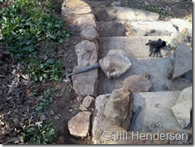 Stair building 101 Image copyright Jill Henderson showmeoz.wordpress.com