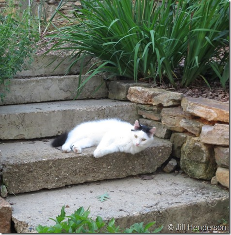 Using flanking stones on concrete stairs. Image copyright Jill Henderson - showmeoz.wordpress.com