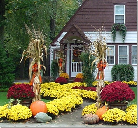Mums can be perennial show-stoppers in the garden.