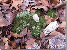 Fall mosaic. Image copyright Jill Henderson showmeoz.wordpress.com