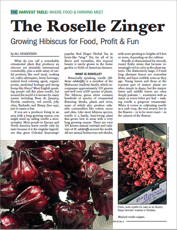 The Roselle Zinger Growing Hibiscus For Food Profit Fun Show Me Oz
