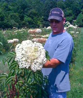 Durham shows off a full head of elderflowers.jpg