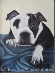 Bentley Boston Terrier Artwork Copyright 2018 Jill Henderson